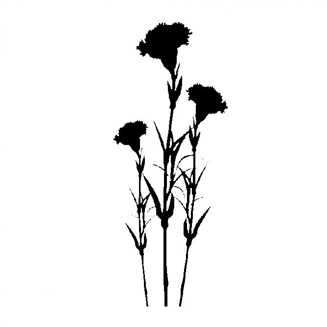 Carnation Fleur