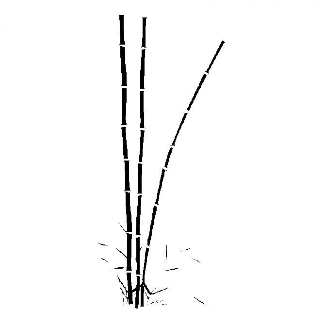 Bambou Droit 2