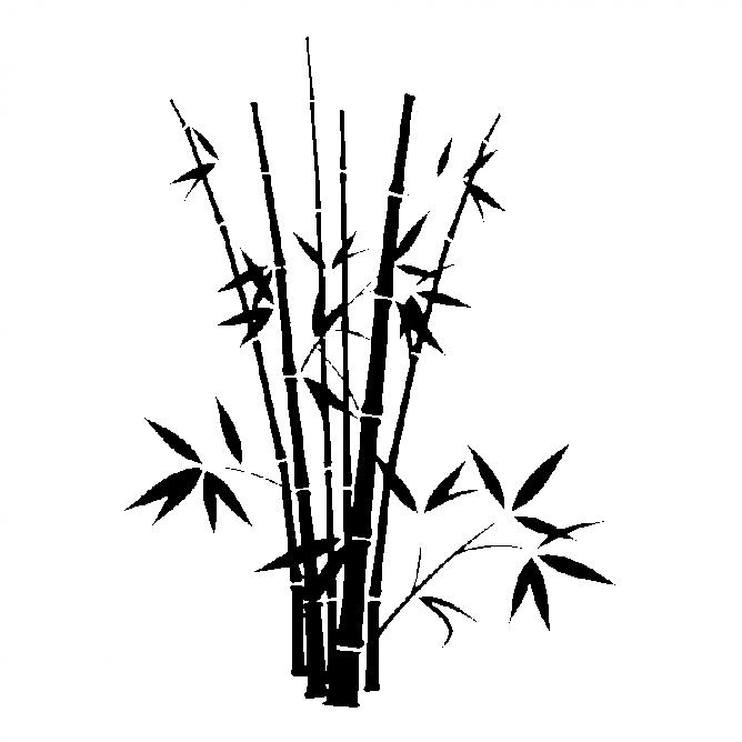 Bambou Droit