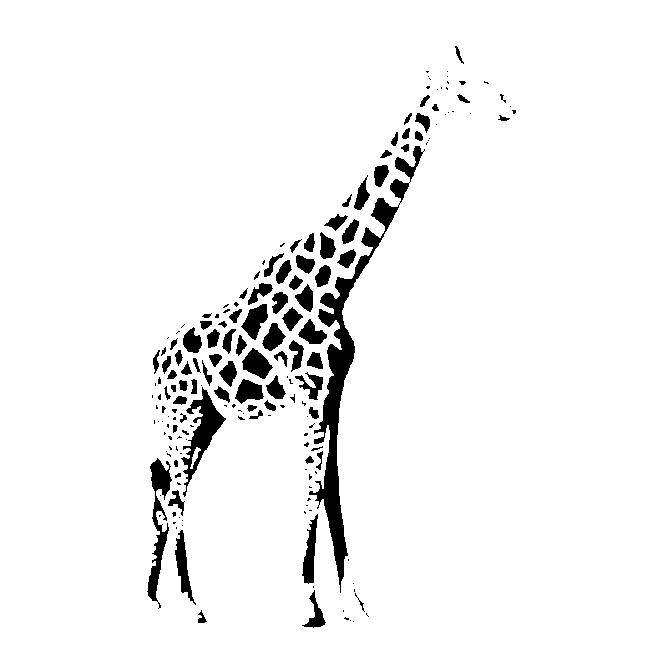 Girafe Africaine