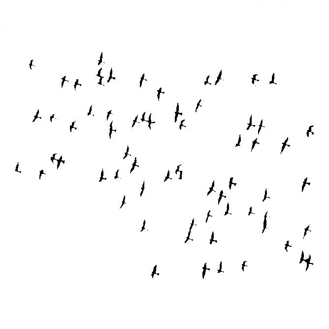 Vol d'Oiseaux