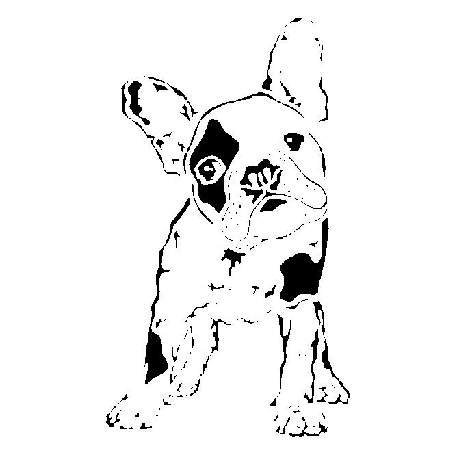 Chien Bulldog