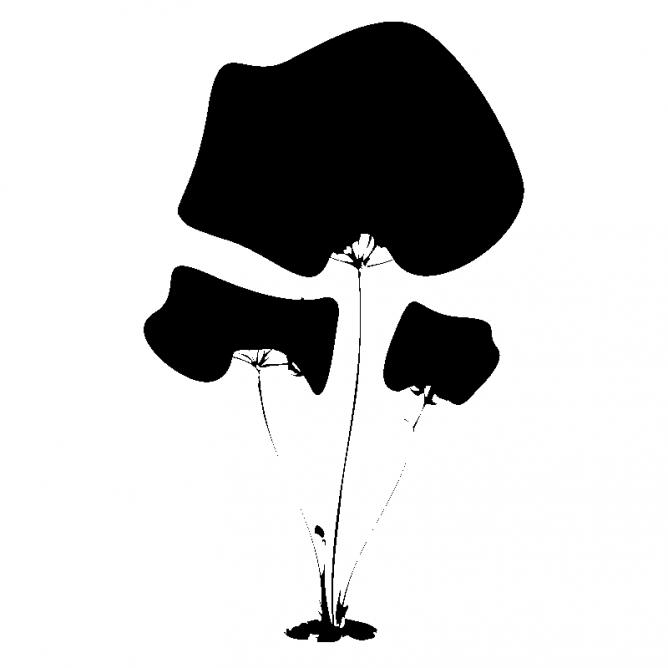 Champignons Géants